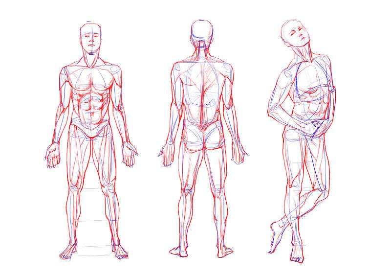 人体结构_人体结构