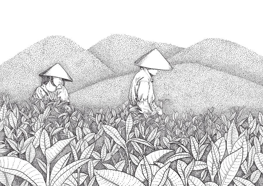 茶的简笔画-茶叶插画线描