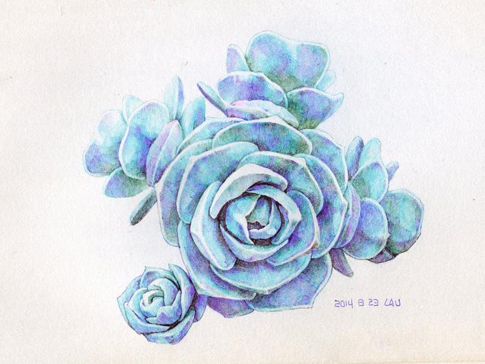 圆珠笔小练·多肉植物|绘画习作|插画|hosanna
