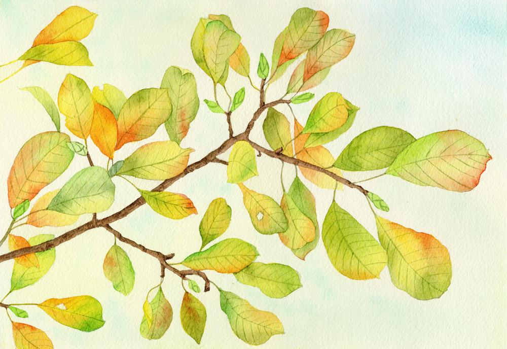 水彩画树叶图片