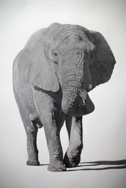 动物素描 - 非洲象