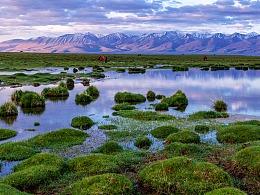 巴音布鲁克湿地