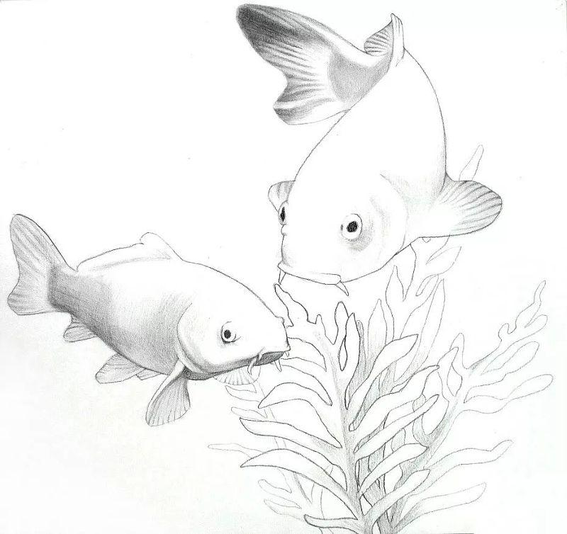 彩色铅笔画步骤教程:幸运锦鲤的画法