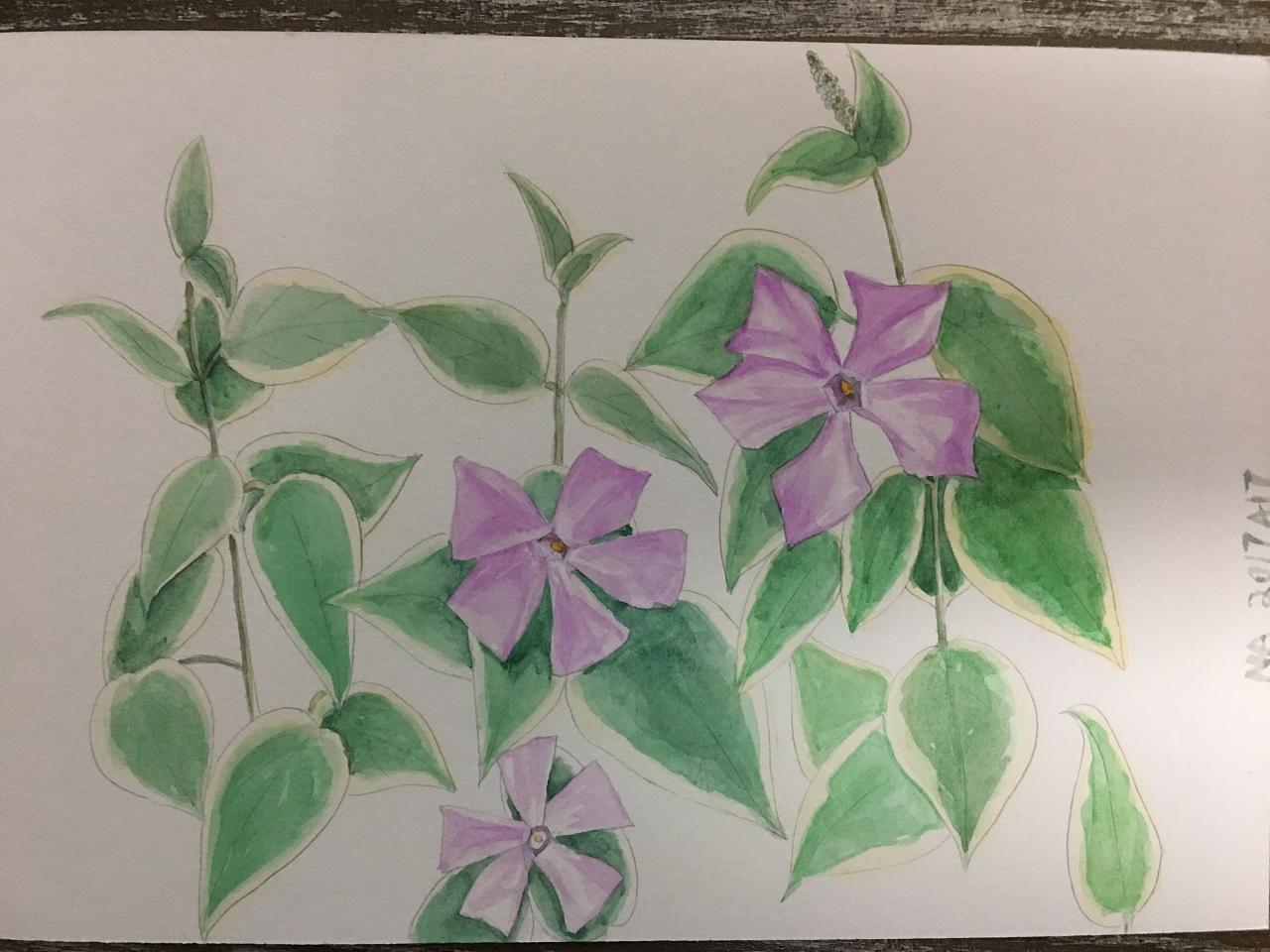 手绘水彩·野花