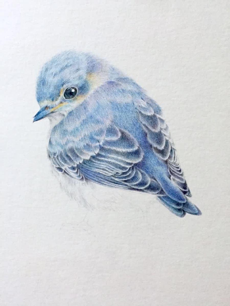 手绘彩铅#青鸟