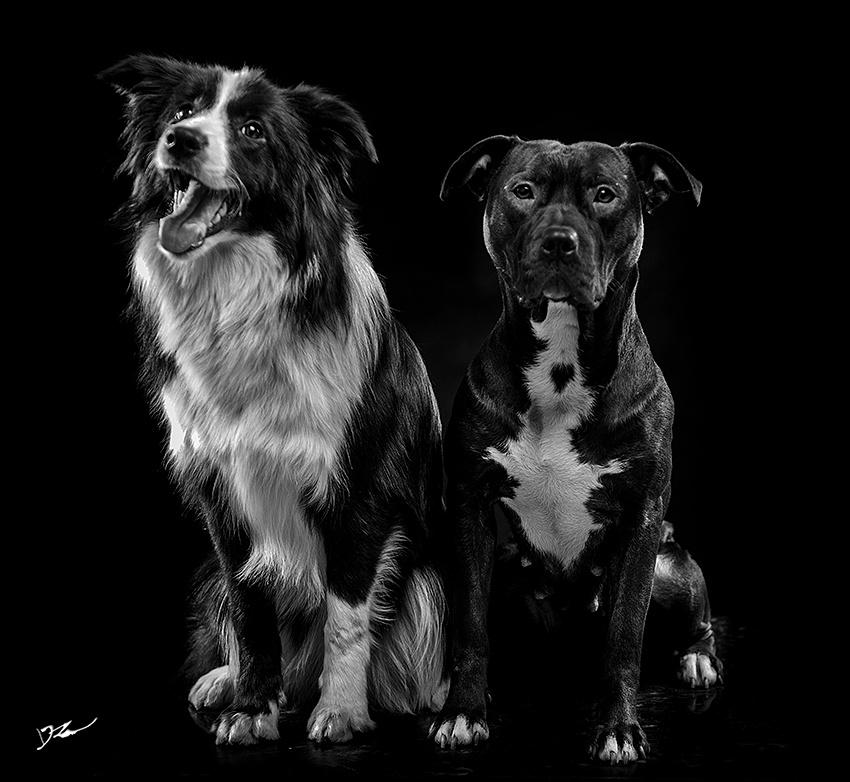 比特--大头|摄影|动物|naturephoto - 原创作品