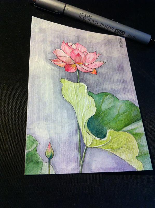 莲花|彩铅|纯艺术|油漆君