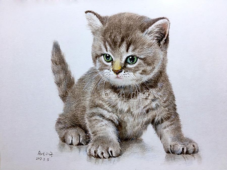 彩铅《小猫咪》