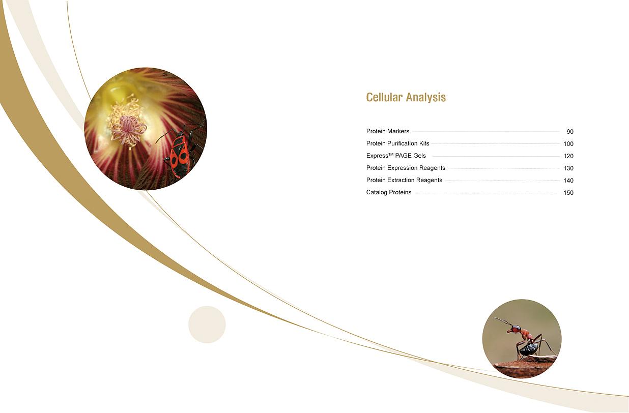 catalog扉页设计|平面|其他平面|fanfanfan9 - 原创作品 - 站酷图片