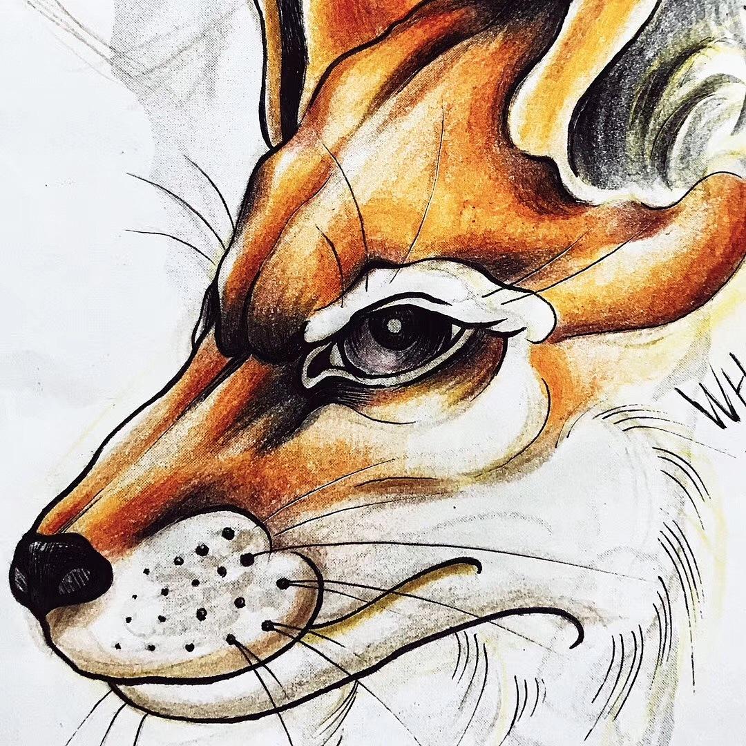 狐狸 彩铅手稿