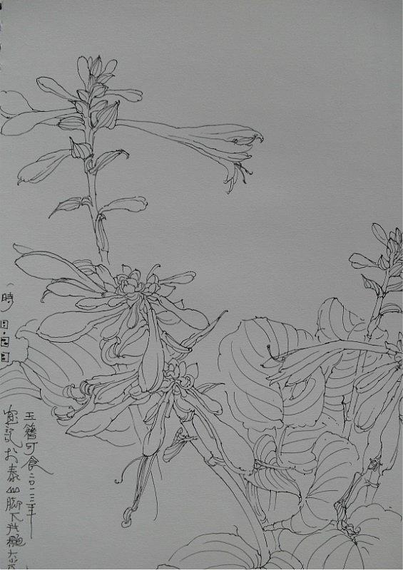 作品来自青岛崂山,写生作品.