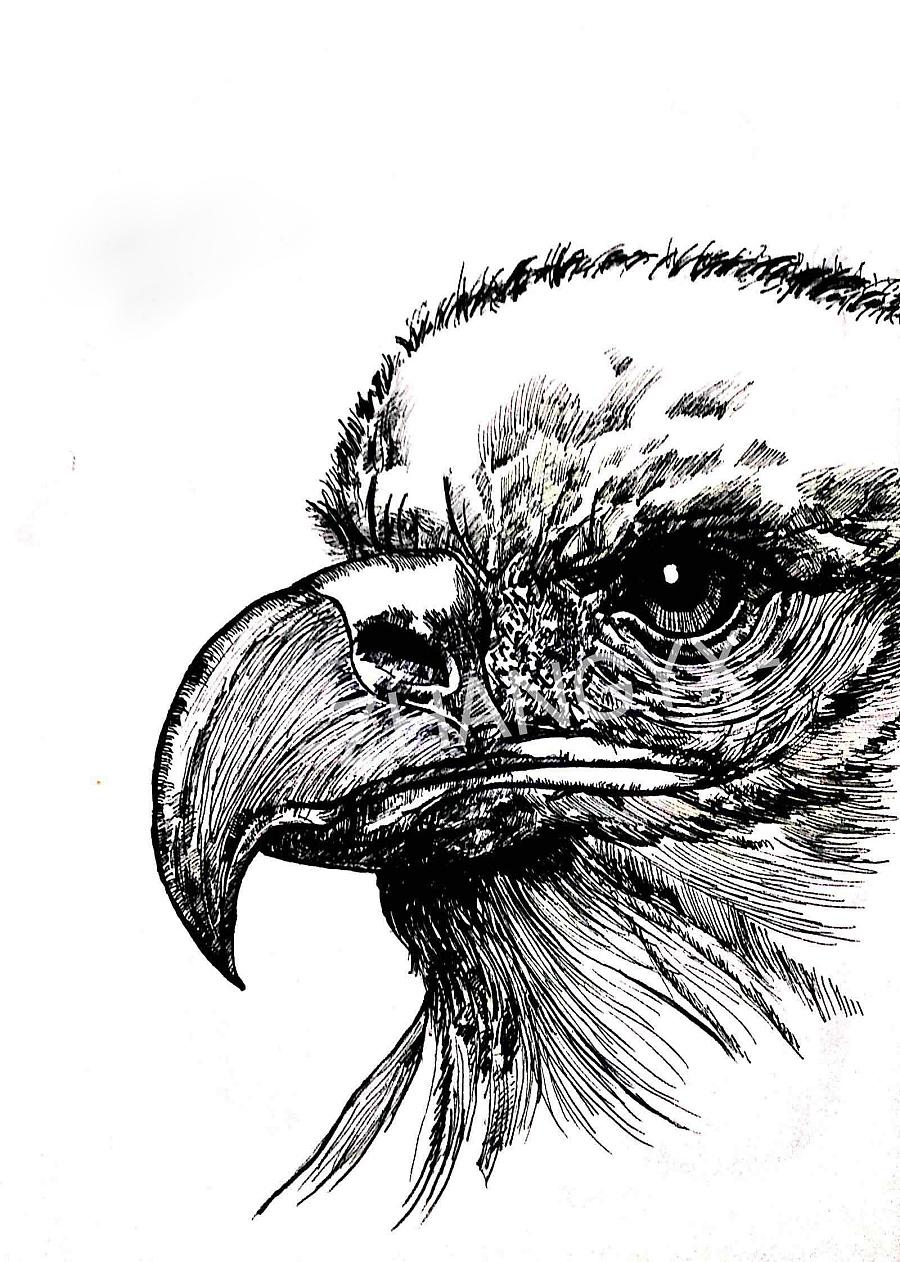 动物--钢笔画