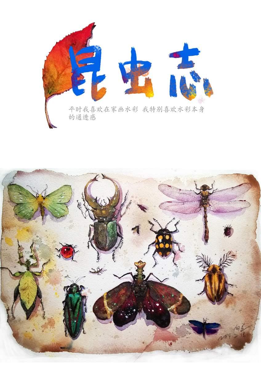 《昆虫志》——手绘水彩