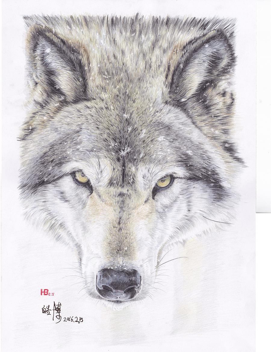 手绘彩铅狼的图片