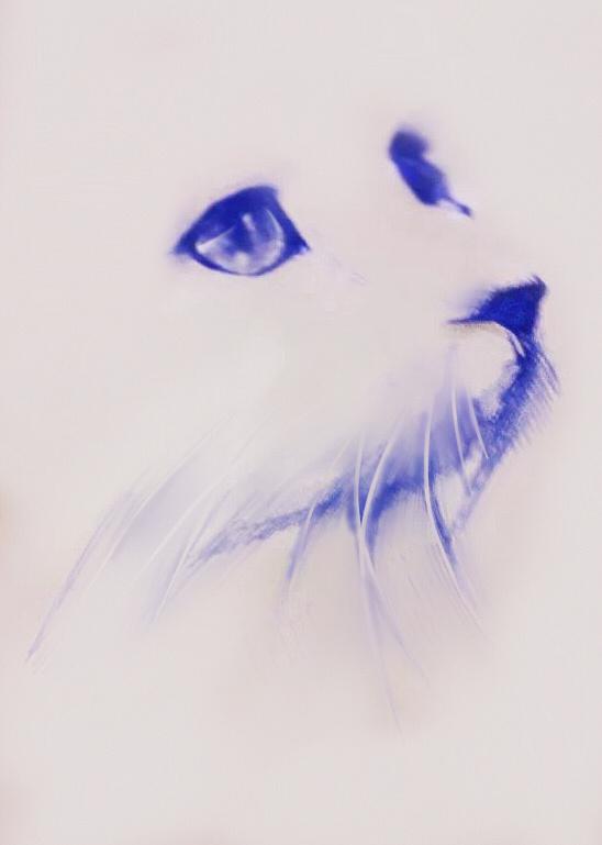 圆珠笔画- 猫