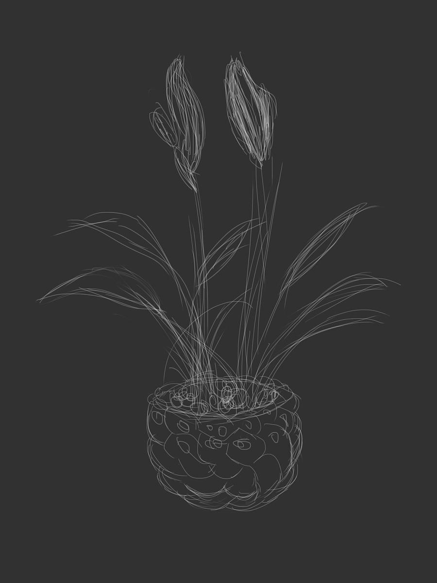 盆栽|绘画习作|插画|fish