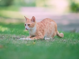 寻猫集83
