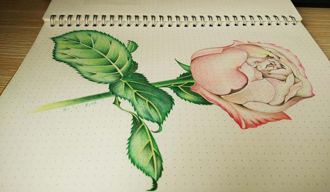 彩铅笔手绘临摹练习-01