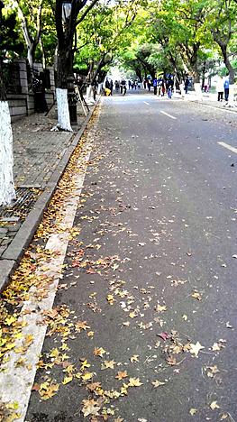 中国二胡曲谱网晚秋