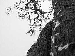 关于一棵梨树的诗