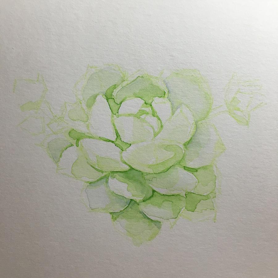 水彩手绘多肉植物 | 静夜|其他绘画|插画|魂儿
