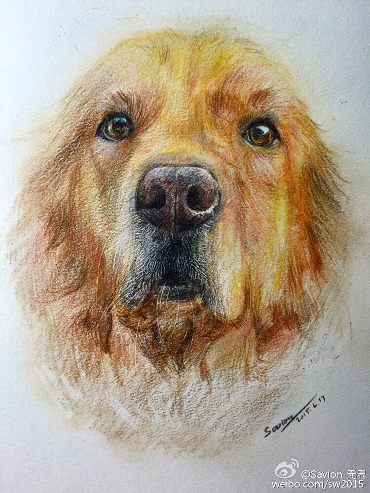 彩铅手绘作品|绘画习作|插画|无界威