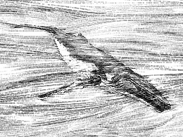 2016 蓝鲸