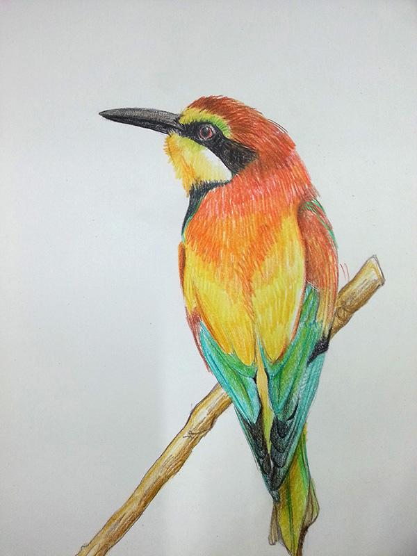 彩铅手绘|彩铅|纯艺术|lizzam