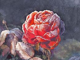 每一片花瓣都有她与众不同的气质,静下心来发现她的美