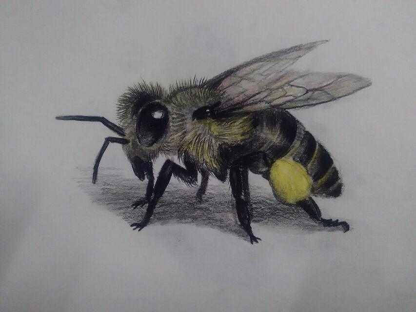 《视频》蜜蜂:铅笔材料小鳄鱼游戏视频彩色视频教学视频教学教学图片