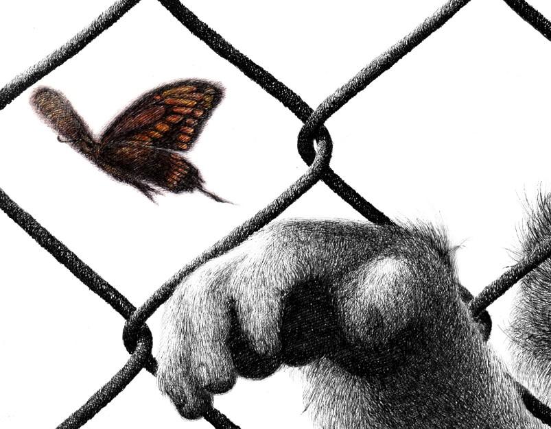 oy钢笔画:自由与束缚