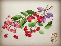 画一串红果子