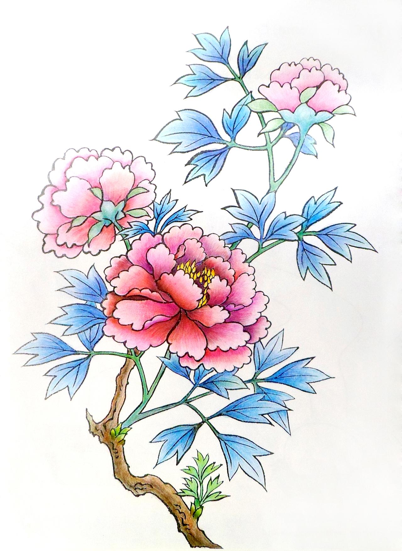 牡丹 彩铅 插画 商业插画 树子9 - 原创作品 - 站酷