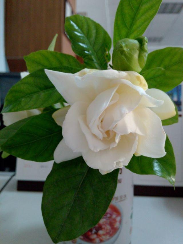 幸福就像花儿一样~|静物|摄影|杨家姑娘哇 - 原创设计