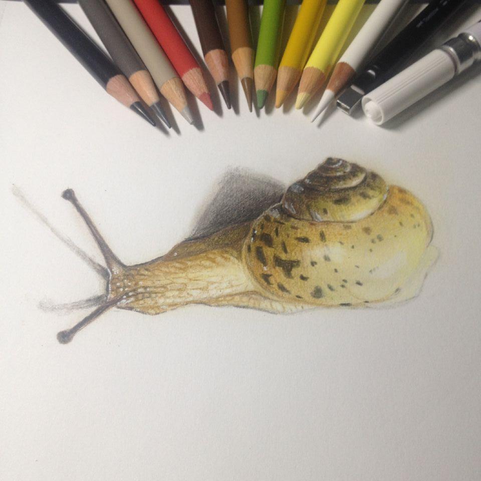 蜗牛部位结构图
