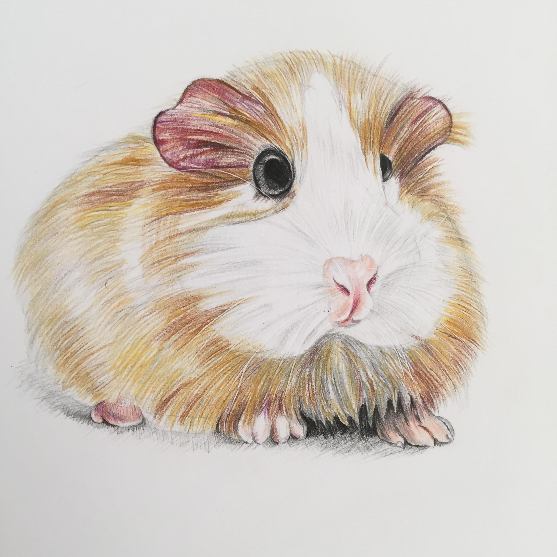 手绘彩铅动物系列