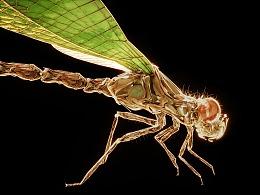 《蜻蜓不点水》
