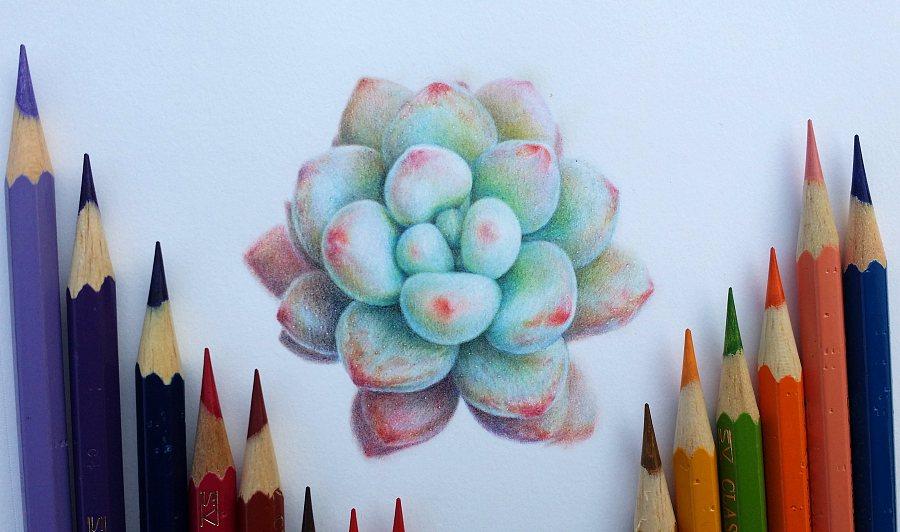 多肉1|彩铅|纯脚本|林朵云-原创设计作品-站酷lua艺术从精通到入门图片
