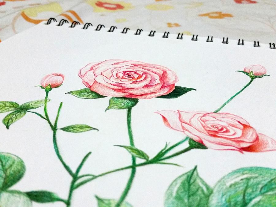 海棠花怎么画铅笔手绘