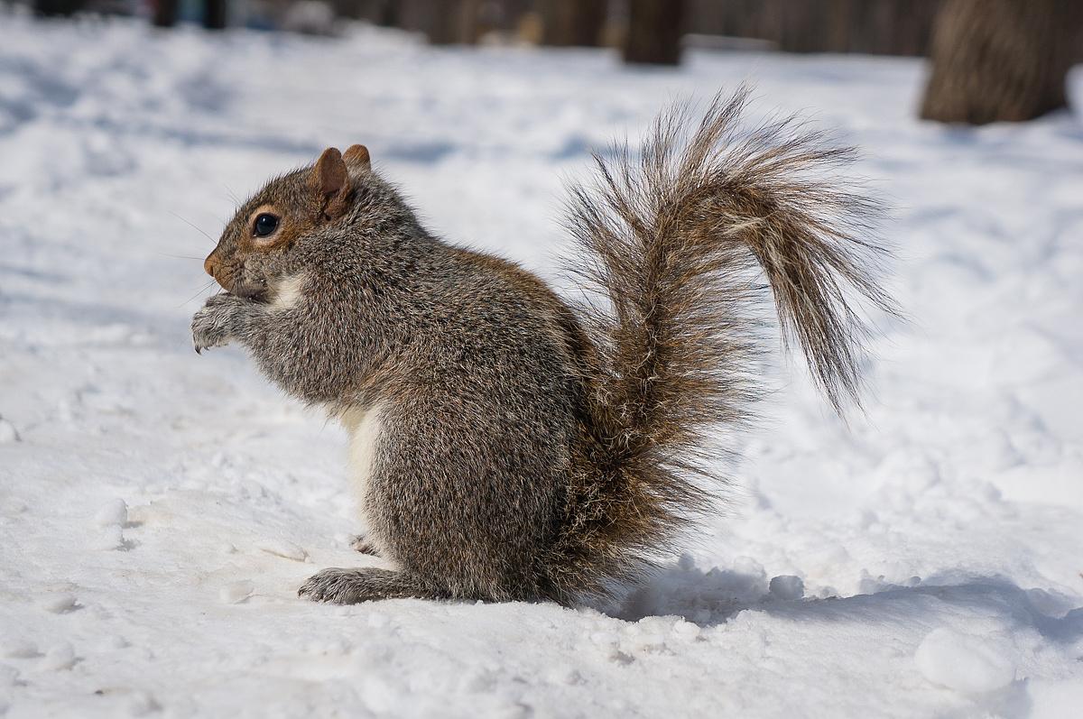 超萌的小松鼠图片