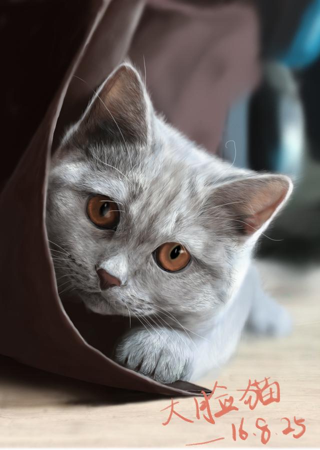 手绘板/数位板 绘画|绘画习作|插画|大脸猫脸大