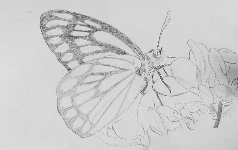 昆虫照片简笔画