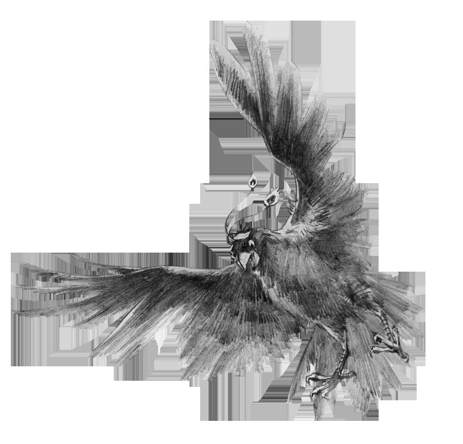 【psd-diy手绘素描】.分层素材-鸟类