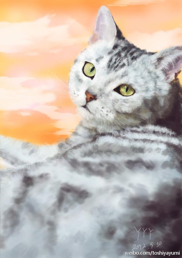 回眸一萌 猫 手绘