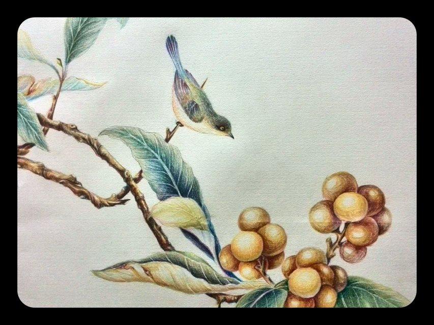 彩铅手绘整理|绘画习作|插画|吹暖风的猫