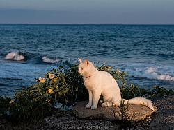 海边的一日