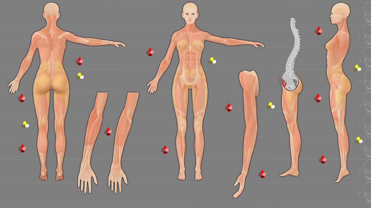女性人体解剖