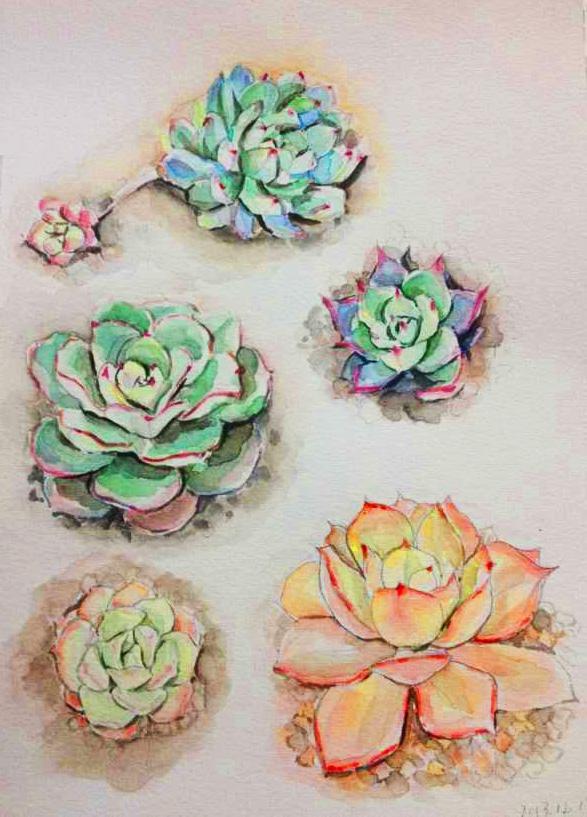 多肉植物水彩|绘画习作|插画|车仔moon