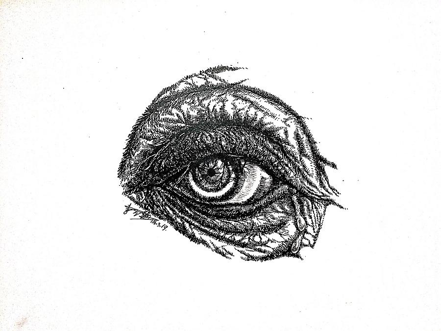 李万海钢笔手绘《象之眸》