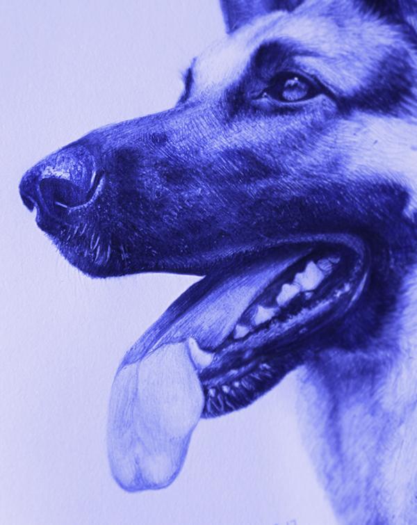 蓝色圆珠笔画动物